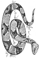 Snake Coloring Pages Free Printable 76955