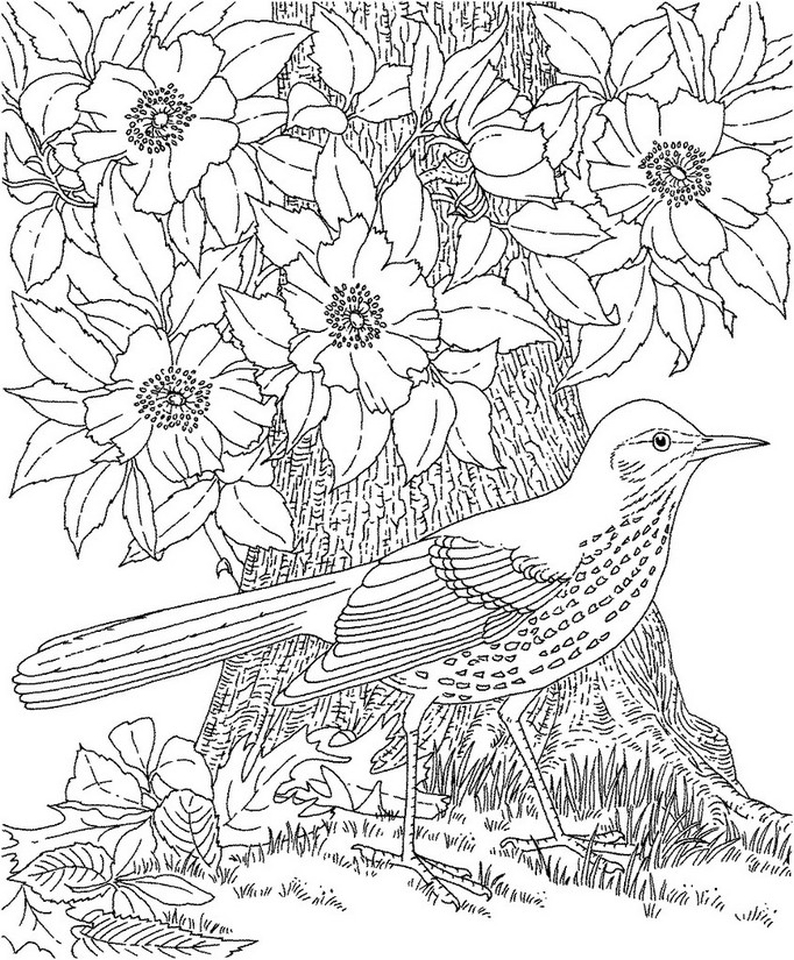 Free Adults Printable of Summer Coloring Pages - 67219