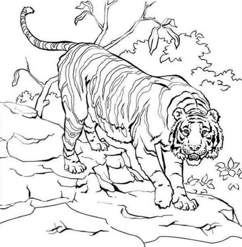 Tiger Coloring Pages to Print for Free - 46021
