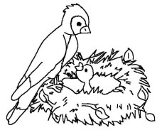 Bird Coloring Pages to Print Online 67118