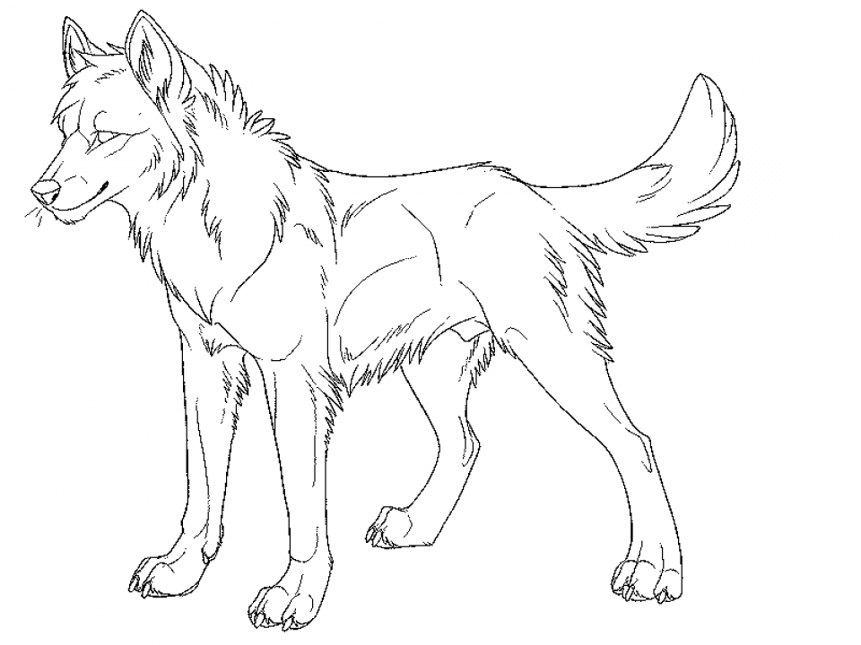 Coloring Pages of a Wolf   67521