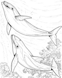 Dolphin Coloring Pages Free to Print 05691