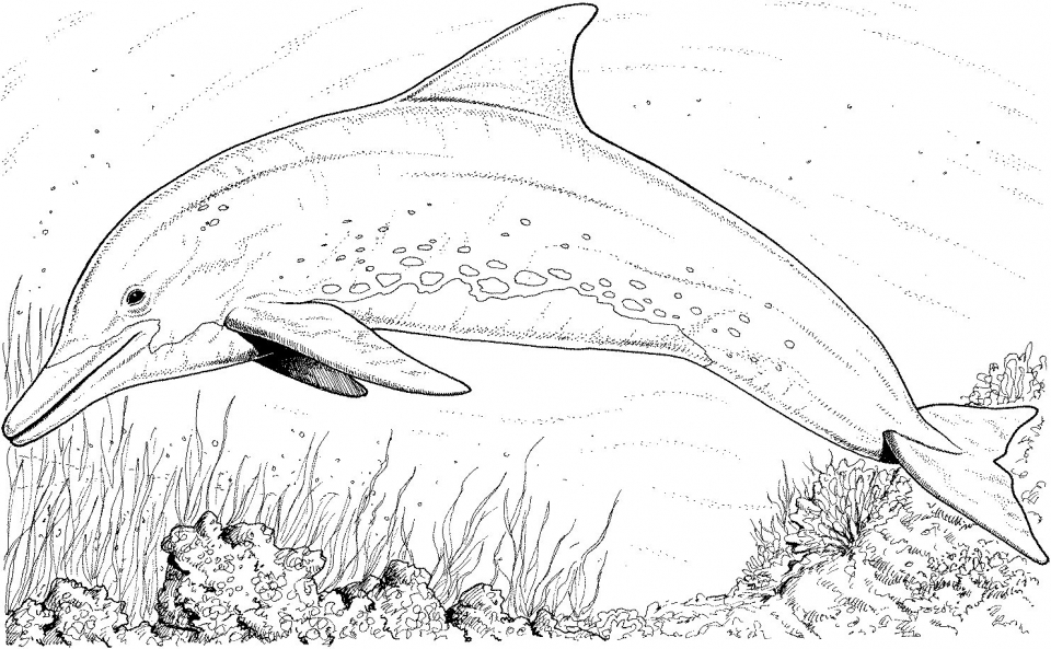 Get This Free Printable Dolphin Coloring Pages For Kids 39185 !