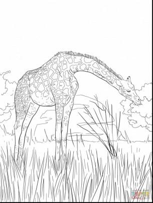 Giraffe Coloring Pages Hard Printables for Older Kids 41852