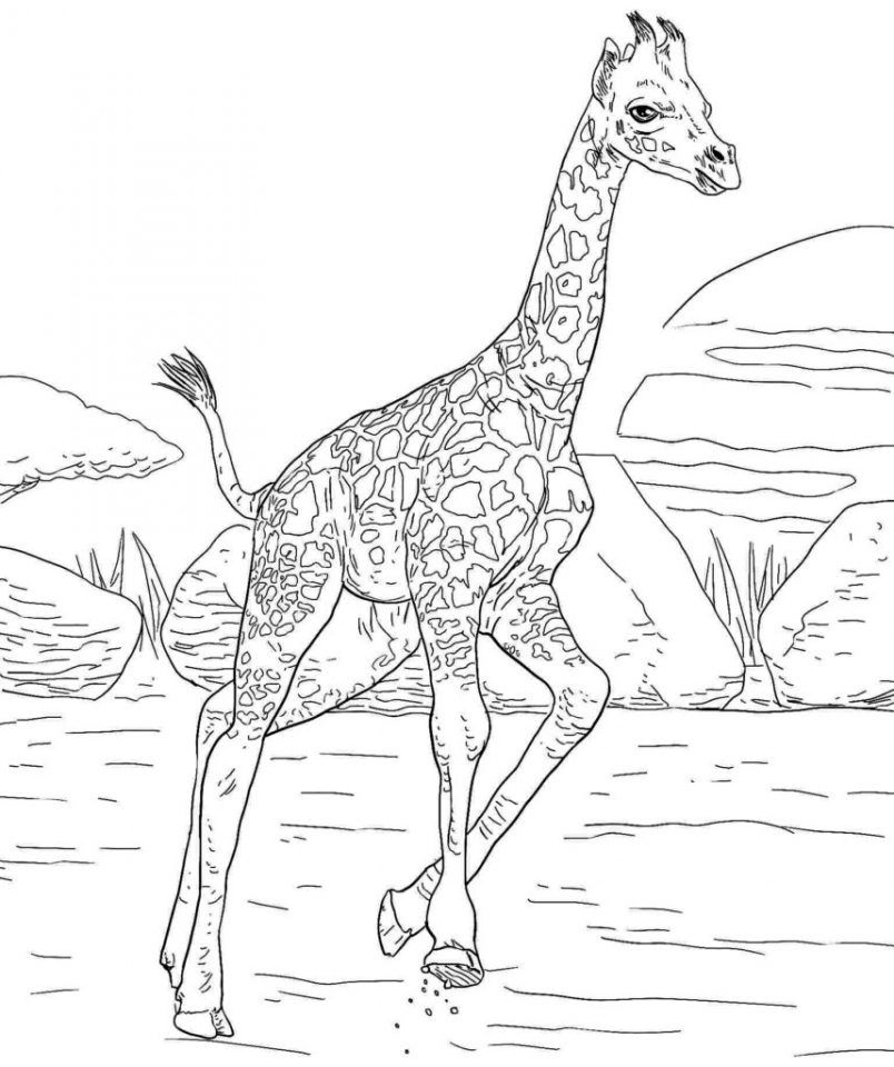 Giraffe Coloring Pages Hard Printables for Older Kids   46178