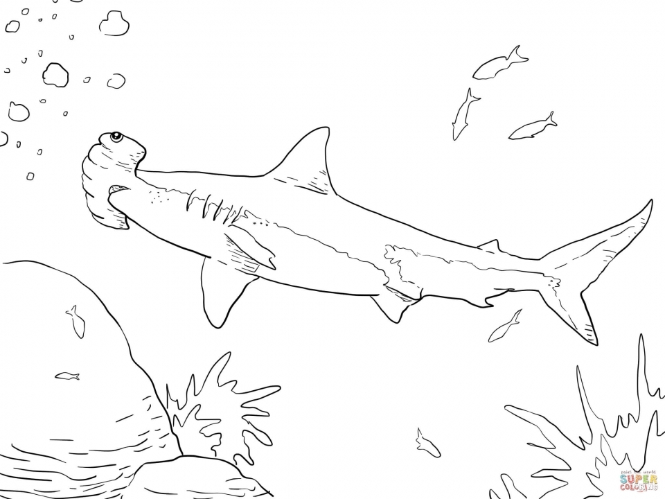Hammerhead Shark Coloring Pages   56731