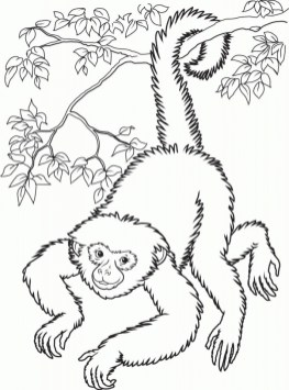 Monkey Coloring Pages Realistic 62418