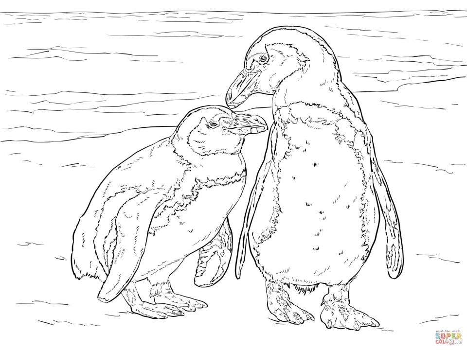 Penguin Coloring Pages for Adults Free to Print   20561