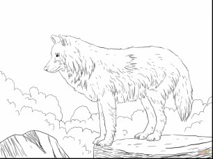 Realistic Wolf Coloring Pages for Adults Free Printable 76831