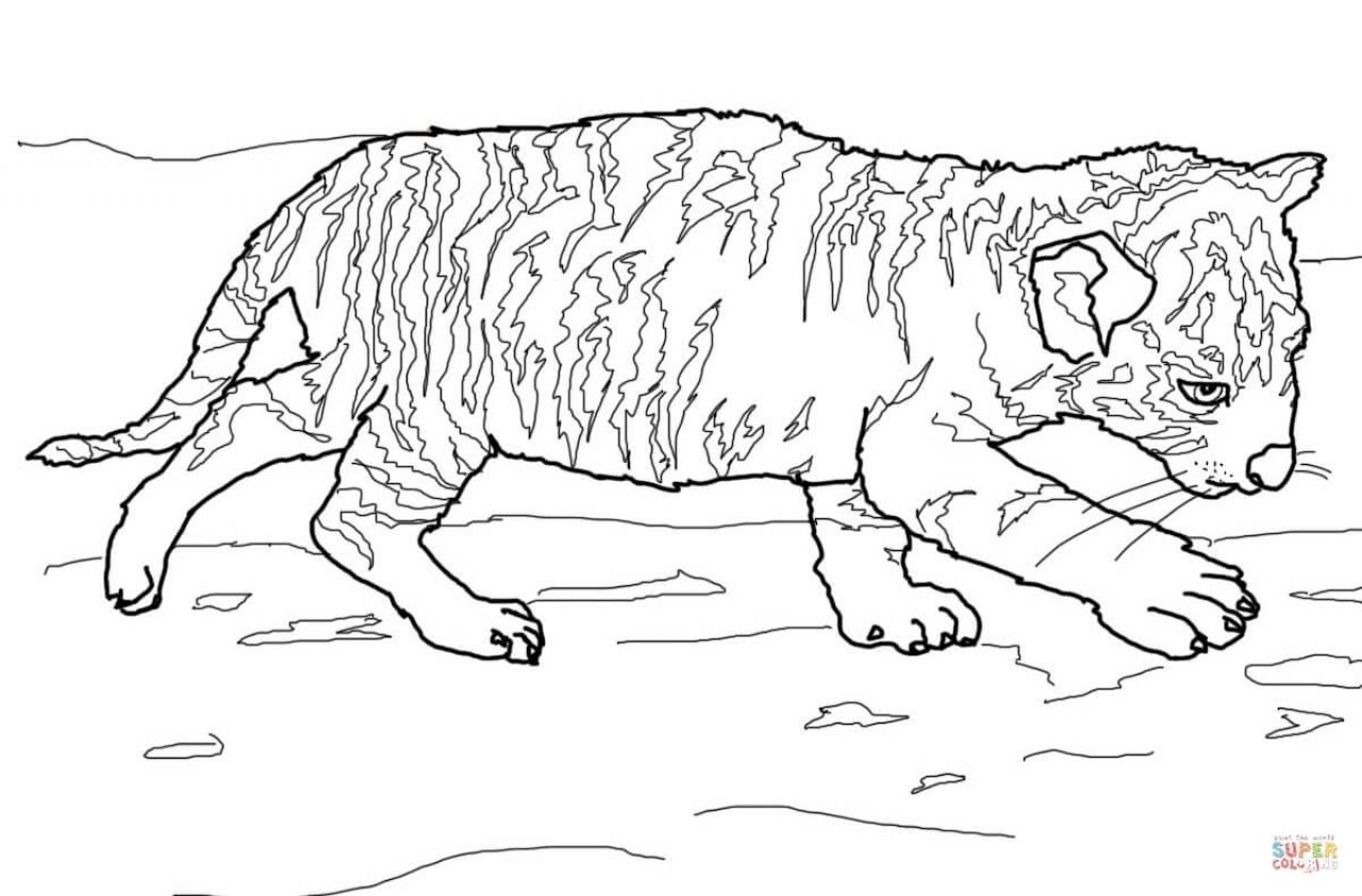 Tiger Coloring Pages for Older Kids   06102