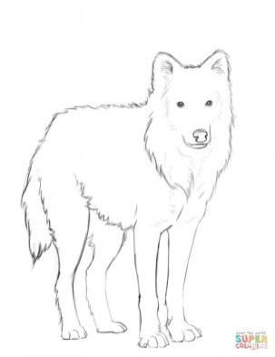Wolf Coloring Pages Free Printable 15362