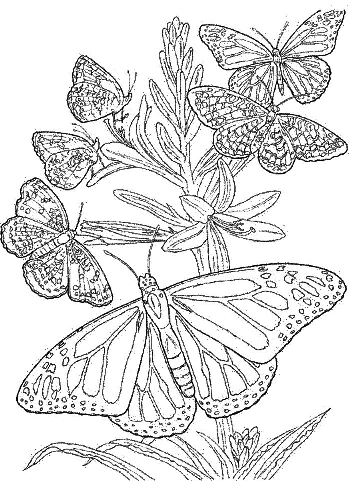 Simple Butterfly - Coloring Page (Insects) | 960x697