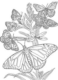 Difficult Butterfly Coloring Pages for Adults - mb879