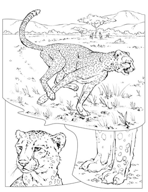 Free Printable Cheetah Coloring Pages - l67vb