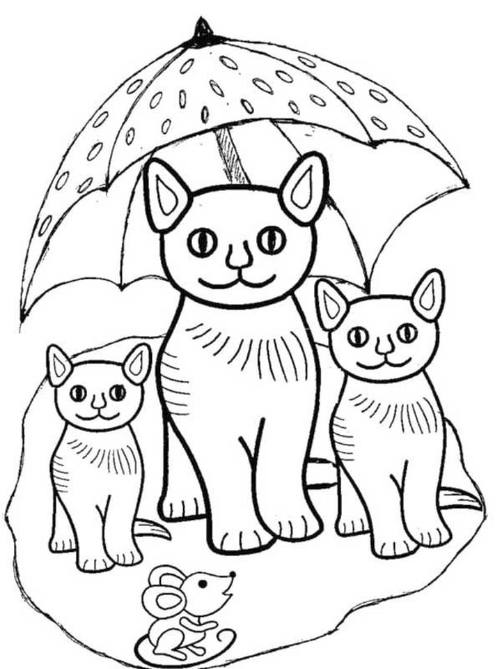 Kitten Coloring Pages Kids Printable - 54672 - new