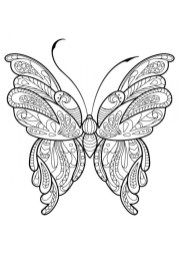 Adult Butterfly Coloring Pages to Print a64b9