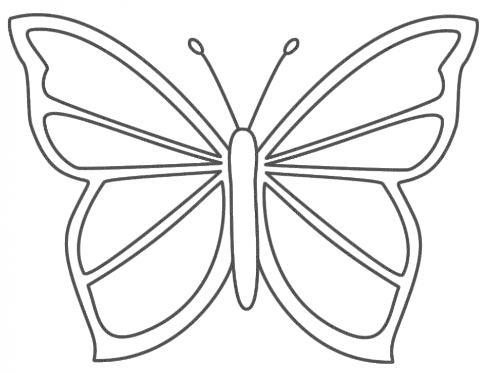 Butterfly Coloring Pages for Preschoolers   8gh51