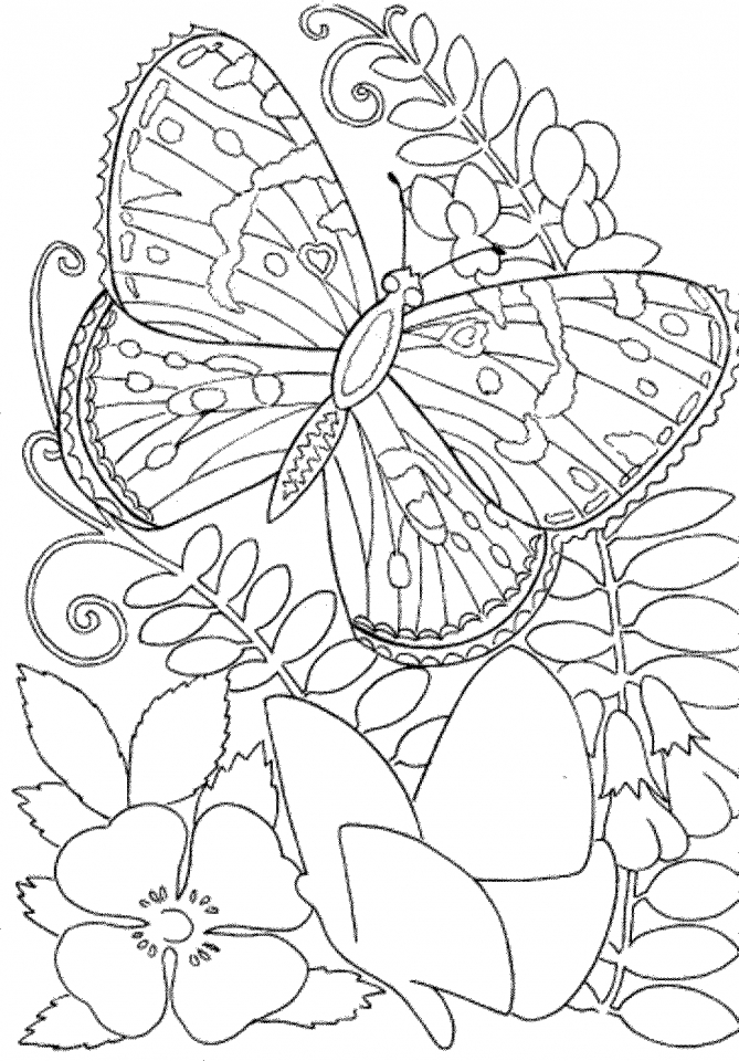 Butterfly Coloring Pages to Print for Adults   90037