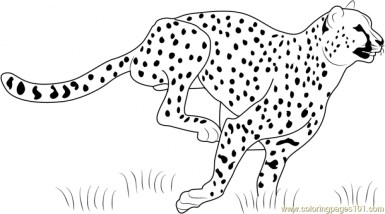 Cheetah Coloring Pages Printable m3sb0