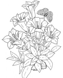 Flowers Coloring Pages for Adults Printable 7g40a