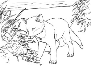 Fox Coloring Pages for Kids wab4n