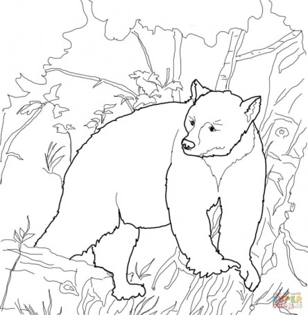 Free Coloring Pages of Bear 9731b