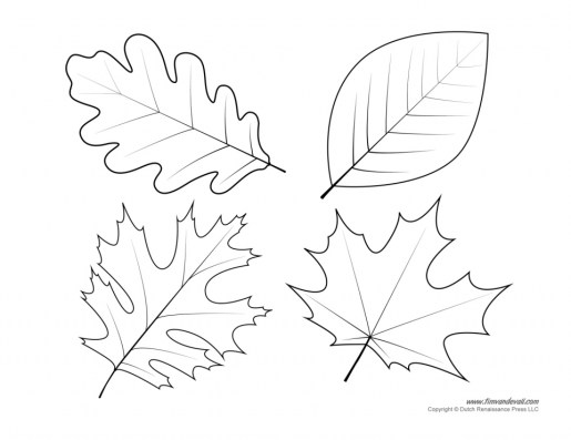Leaf Coloring Pages Free to Print 2519s