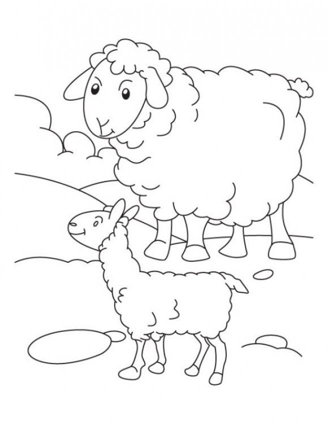 Sheep coloring pages preschool   wayc7