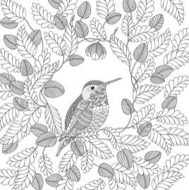 Adult Coloring Pages Animals Bird 1