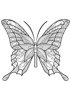 Adult Coloring Pages Animals Butterfly 2
