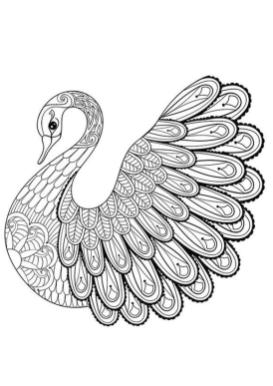 Adult Coloring Pages Animals Swan 1
