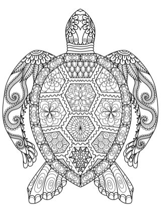 Adult Coloring Pages Animals Turtle 1