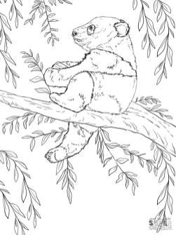 Baby Panda Climbing a Tree Coloring Pages