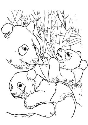 Happy Panda Family with Two Baby Panda Coloring Page