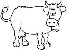 Cow Coloring Pages for Preschoolers Confused Cow