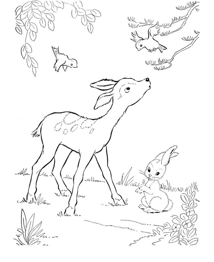 Deer Coloring Pages Online Baby Deer Is Curious of Bird