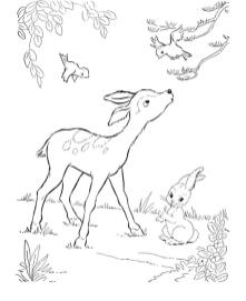 Deer Coloring Pages Online Baby Deer Is Curious of Bird