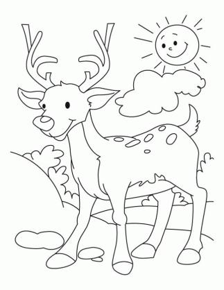 Deer Coloring Pages Online Cartoon Deer Drawing for Toddler