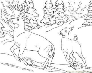 Deer Coloring Pages Online Two Deers Running Fast