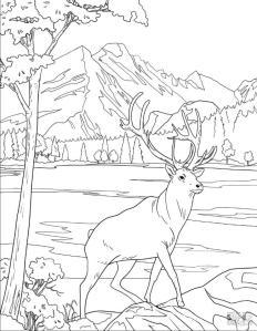 Deer Coloring Pages Realistic Deer Drawing for Older Kids