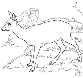 Deer Coloring Pages Roe Deer Has No Horn