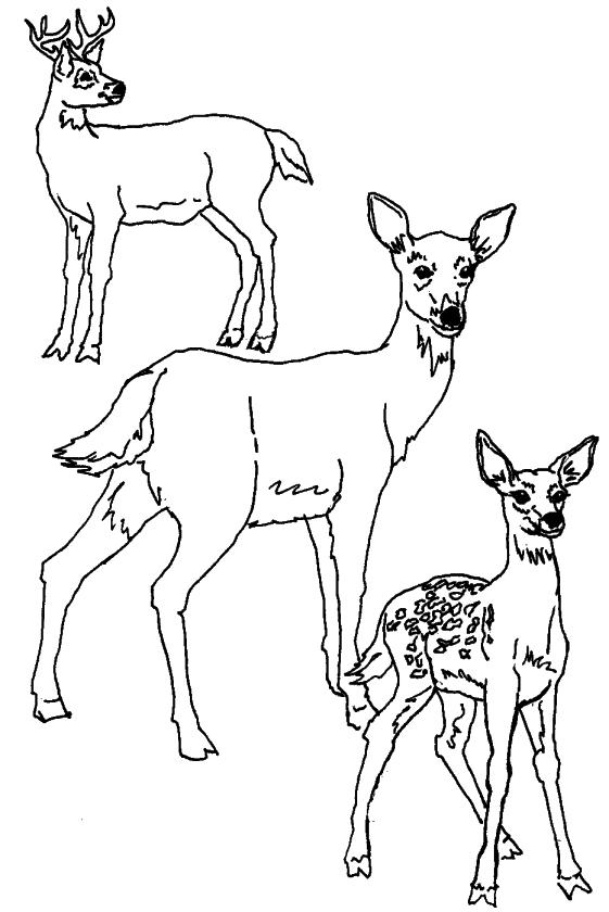 Deer Coloring Pages for Kids Deer Family