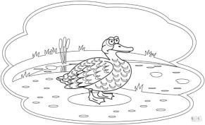 Duck Coloring Pages Grumpy Old Duck