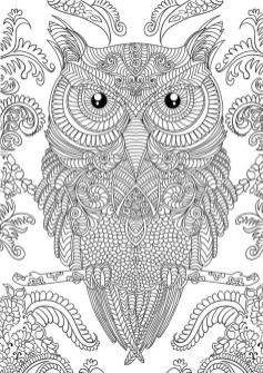 Owl Adult Coloring Pages Free Printable dr04