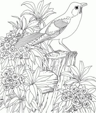 Hard Coloring Pages Printable Free Realistic Bird Image