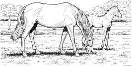 Hard Coloring Pictures for Adults Grazzing Horses