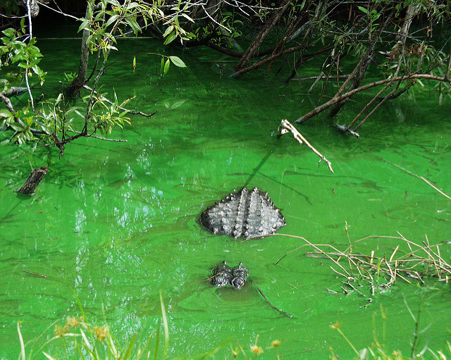 The Everglades Forever Act Amendments