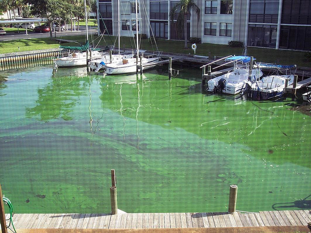 More than 5,000 People Protest Discharges into the St. Lucie Estuary