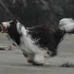 josee running