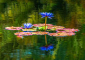 KSnead Water-Garden-2-RCrunup